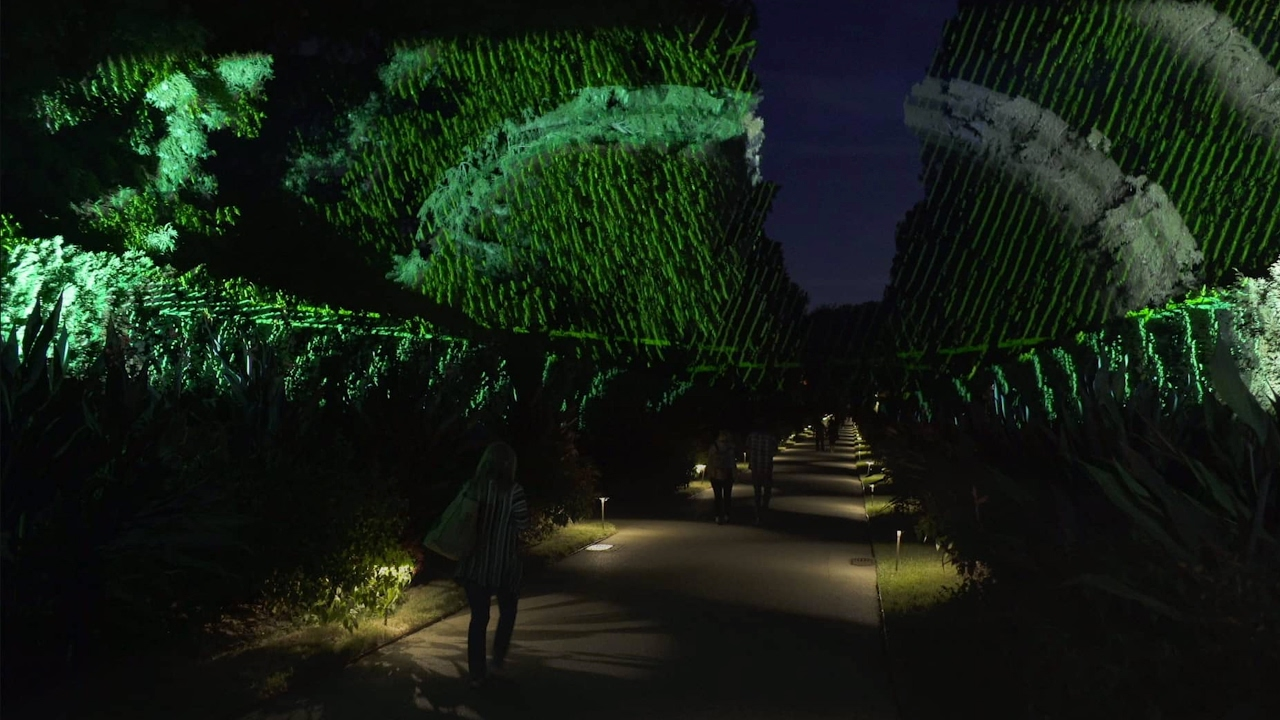 Nightscape A Light And Sound Experience At Longwood Gardens Year 2 Youtube