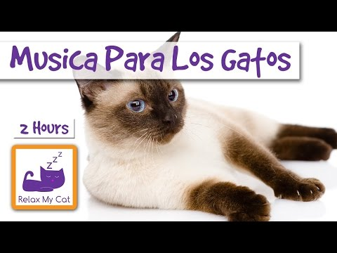 2 hours of relaxing music for cats