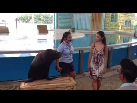 Ocean Adventure Subic, Sea Lion's Kiss