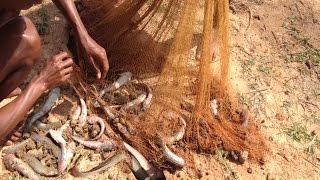 Amazing Fishing Trap in Cambodia-Tradition Net Fishing Videos-amazing net fishings-Fishing Net khmer