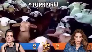 سيريناي ضد بينسو 😰💔 حسب اراء الشارع التركي