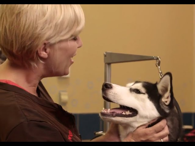 How to Brush Your Dog's Teeth (Petco)