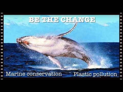 PLASTIC POLLUTION is harming our oceans & animals | MARINE CONSERVATION