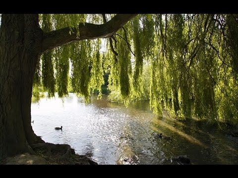 Cycle Of The Willow Tree Poem Music Beautiful Dreams Adrian Von Ziegler