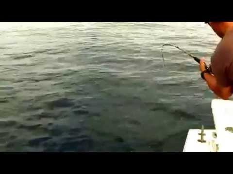 Yellowtail Fishing Double Hook Ups Ensenada 2015 Sergio's Sport Fishing Charter