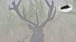 Best of red stag hunting compilation Meilleur de Cerf au brame Hirschbrunft beste momente Rykowisko