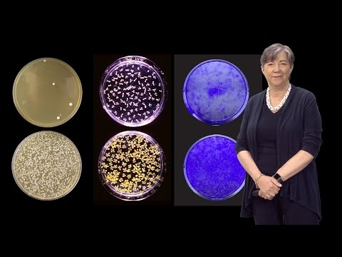 Susan Lindquist (Whitehead, MIT / HHMI) 2: Hsp 90: a Driver of Novelty in Evolution