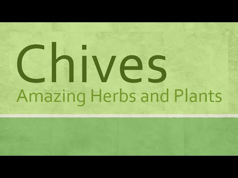 Chives health Benefits Amazing Herbs and Plants Chives nutrition facts