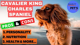 Things You Wish You Should Knew Before | Getting A Cavalier King Charles Spaniel | Daily Pets