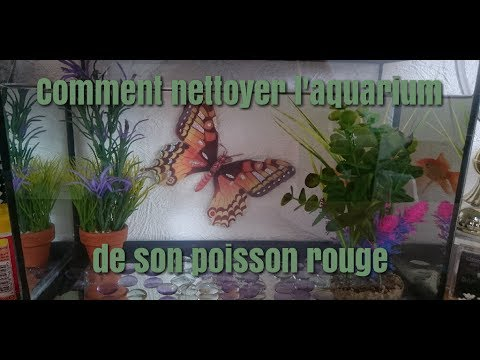 Tuto comment nettoyer l 39 aquarium de son poisson rouge for Nettoyer un aquarium poisson rouge