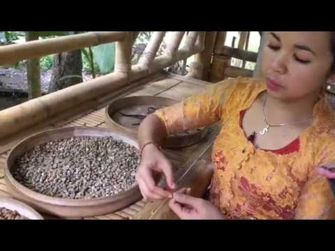 The Most Expensive Coffee In The World Is Made From Cat Poop