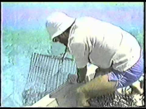 Kure Monk Seals 1988.mpg