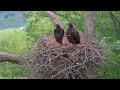 Dale Hollow Eagle Camera