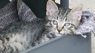 Cute Feral Kitten Discovers Utility Cart Cat Condo thumbnail