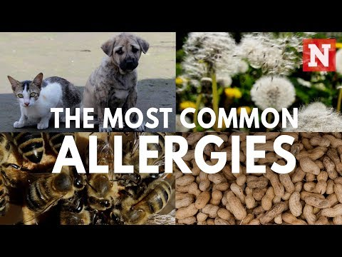 Five Most Common Allergies