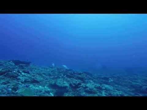 Mooloolaba Barwon Banks Gopro Underwater