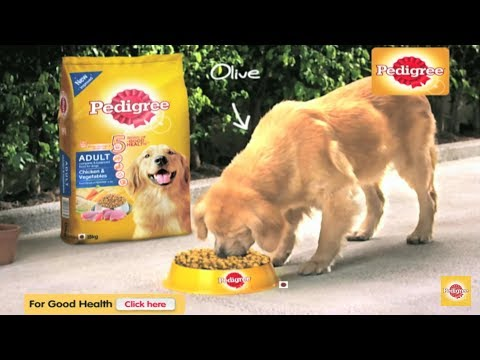 Pedigree dog food review || Best food for your dog || in hindi || pedigree