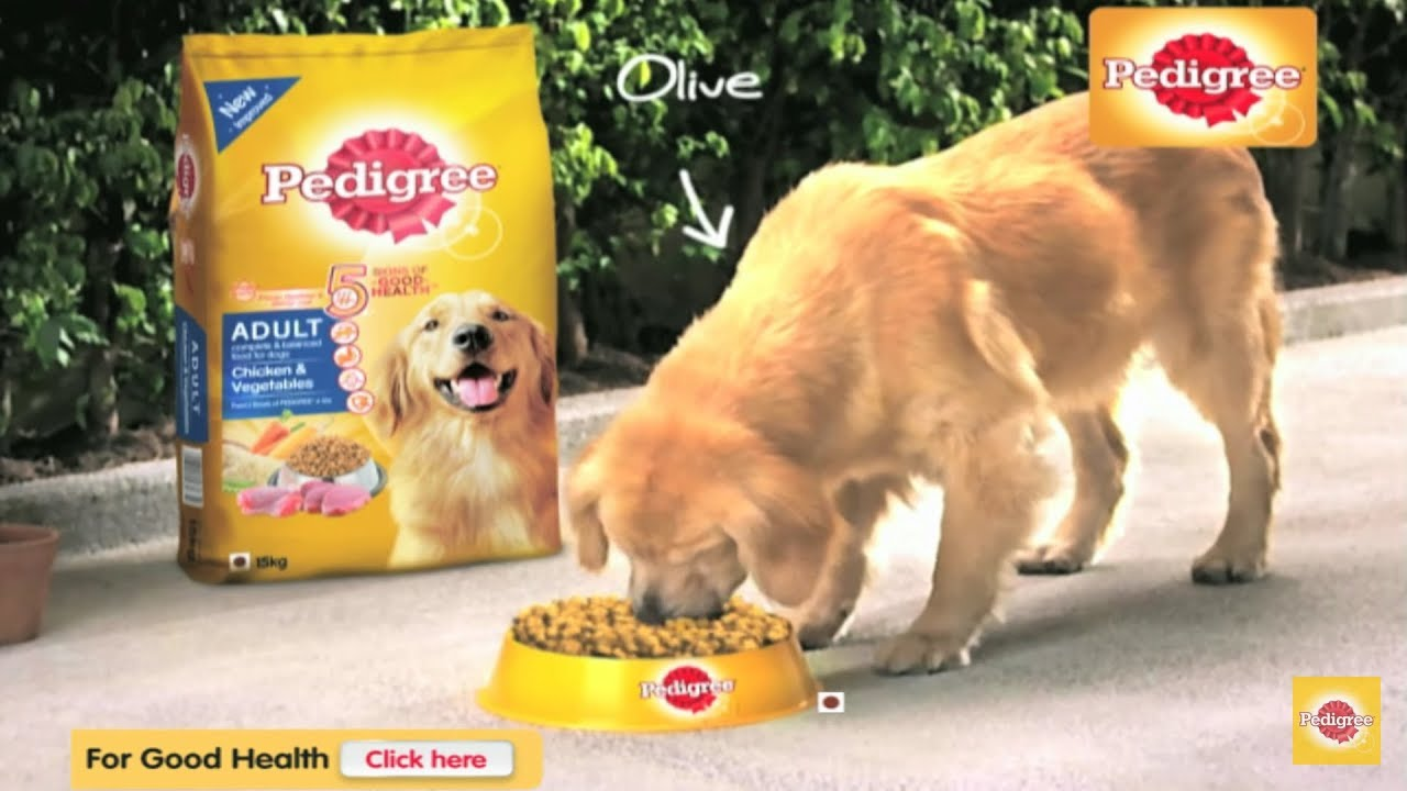 Pedigree Dog Food Review Best Food For Your Dog In Hindi