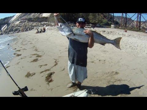 White sea bass and halibut kayak fishing youtube for Sf bay fishing report