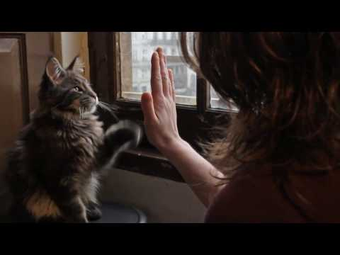Taught my Maine Coon kitten to shake paw