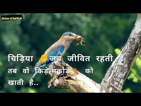 Ego Motivational Quotes Status Shayari