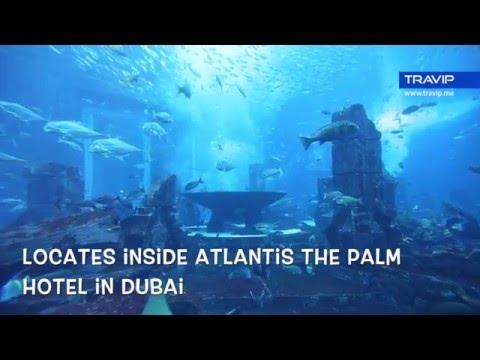 The Lost Chambers Aquarium at Atlantis The Palm Dubai