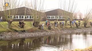 2017 week 10 - Wilgen knotten langs de IJssel