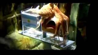 Hommage à Paul le Poulpe... héros à 8 tentacules de la Coupe du Monde 2010