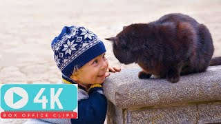 FUNNY CATS AND BABIES PLAYING TOGETHER #8 |Funny Babies and Pets