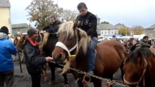 Foire aux chevaux de Fay-sur-Lignon 2016