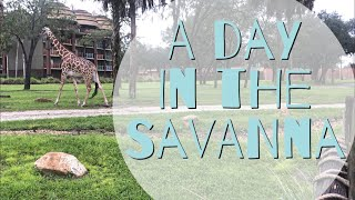 A day in the Savanna | Sanaa at Disney's Animal Kingdom Lodge