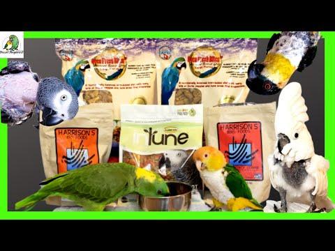 Feeding Your Parrot   Parrot Pellets   Avian Vet Recommended