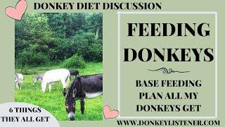 Feeding Donkeys {6 Things ALL my Donkeys get Fed} Base Feeding Plan for Donkeys