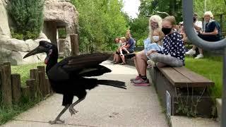 A Tracy Aviary Staycation