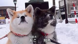 米グーグルが、「秋田犬『忠犬ハチ公』のふるさと」として町おこしを進...