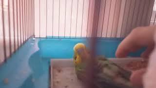 VLOG:у меня умирает попугай.