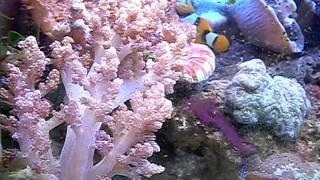 軟珊瑚影片