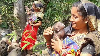 Intresting to known This woman has won the heart of any unknown langur flock of the world