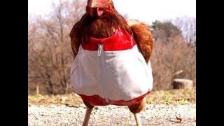 Куриная грудка в сметанном соусе с чесноком (рецепт, пародия от Глафиры Абрамовны)