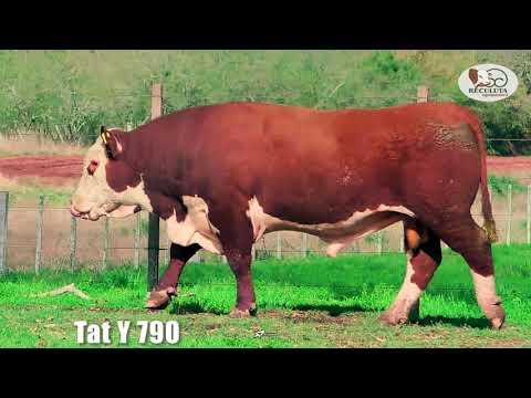 LOTE 10   TAT Y790 TOURO HEREFORD RECULUTA AGROPASTORIL