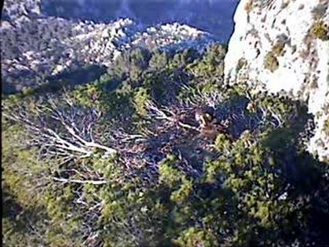 Black Vulture Nestcam #8: The Chick´s First Day