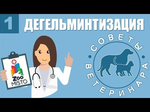 Глисты:симптомы,профилактика,народные средства от глистов