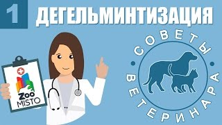 Как вывести глистов у кошки или собаки | Дегельминтизация | Советы Ветеринара
