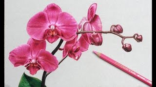 How I Draw Flowers, Orchids drawing