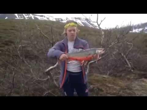 Røye 3kg Indre Troms