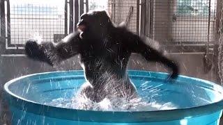Watch Gorilla