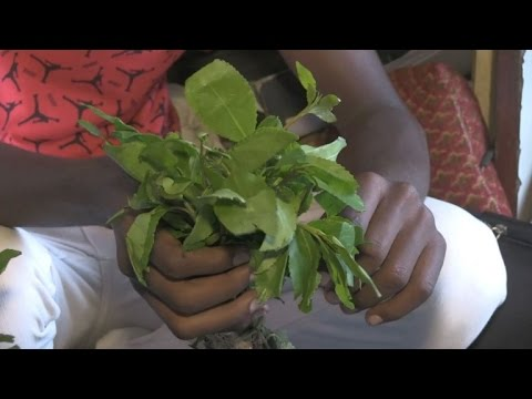 Djibouti's khat addiction holding back development
