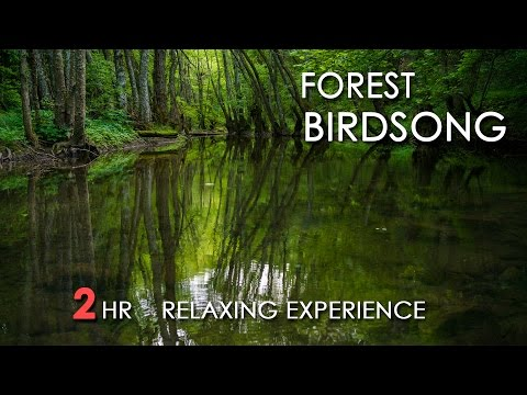 Forest Birdsong - Relaxing Nature Sounds - Birds Chirping -