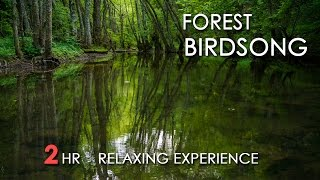 Video Forest Birdsong - Relaxing Nature Sounds - Birds Chirping - REALTIME - NO LOOP - 2 Hours - HD 1080p download MP3, 3GP, MP4, WEBM, AVI, FLV Oktober 2018