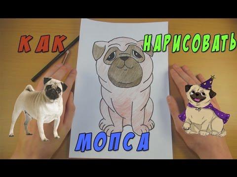 Как Нарисовать Мопса | Рисуем Собаку | Уроки Рисования